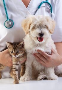 Betal din dyrlægerening senere med kredit